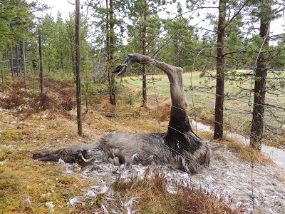 Foto: Bjørnar Johnsen ID:392