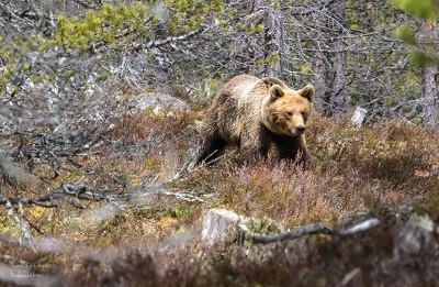 Foto: Kåre Egil Kvilten ID:105