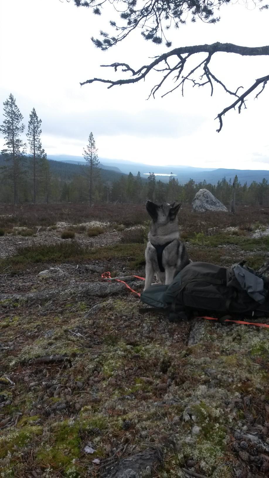 Foto: Ole Opseth
