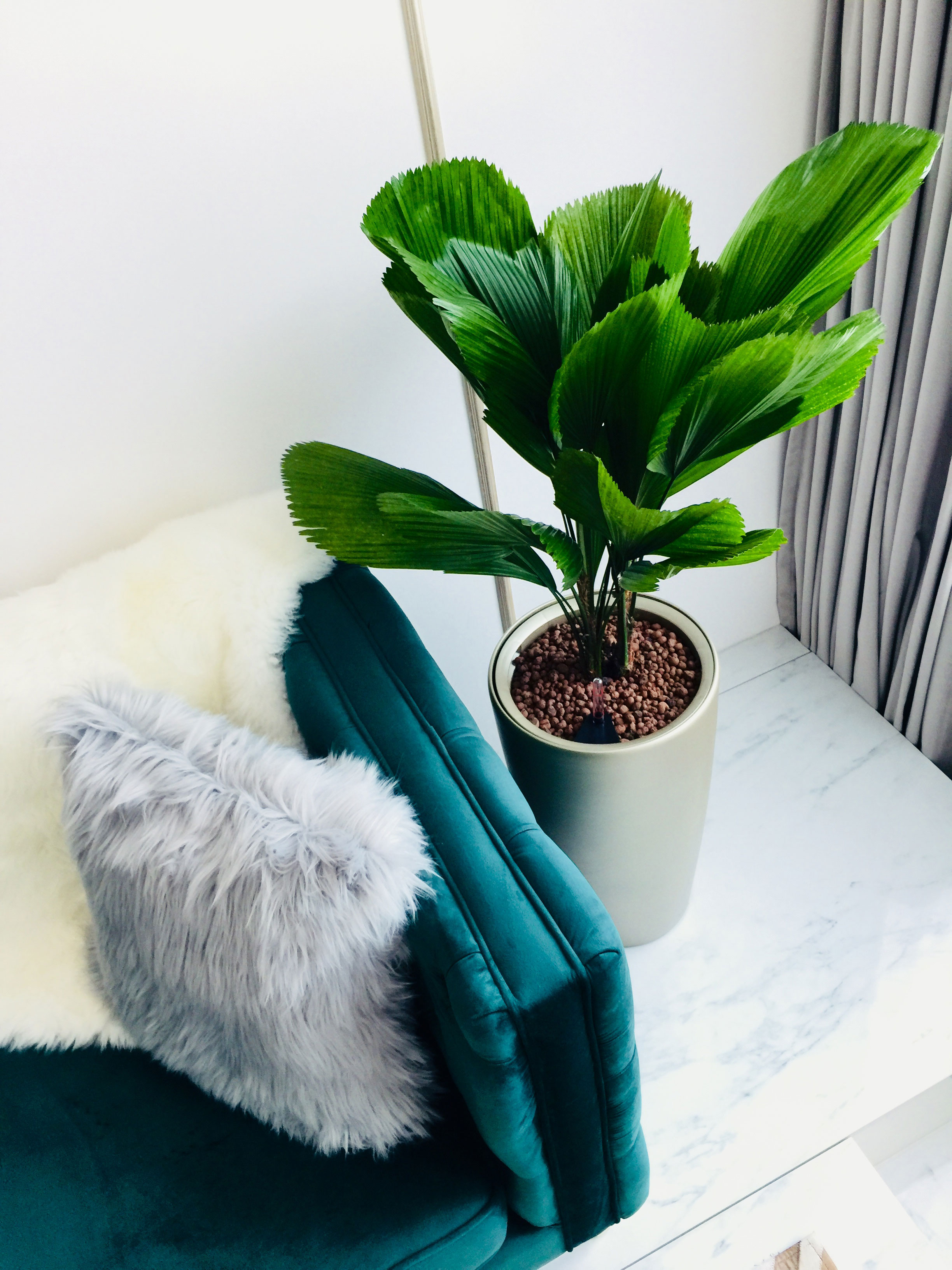 Specially selected plant adds to the space's lushness while providing a natural balance.
