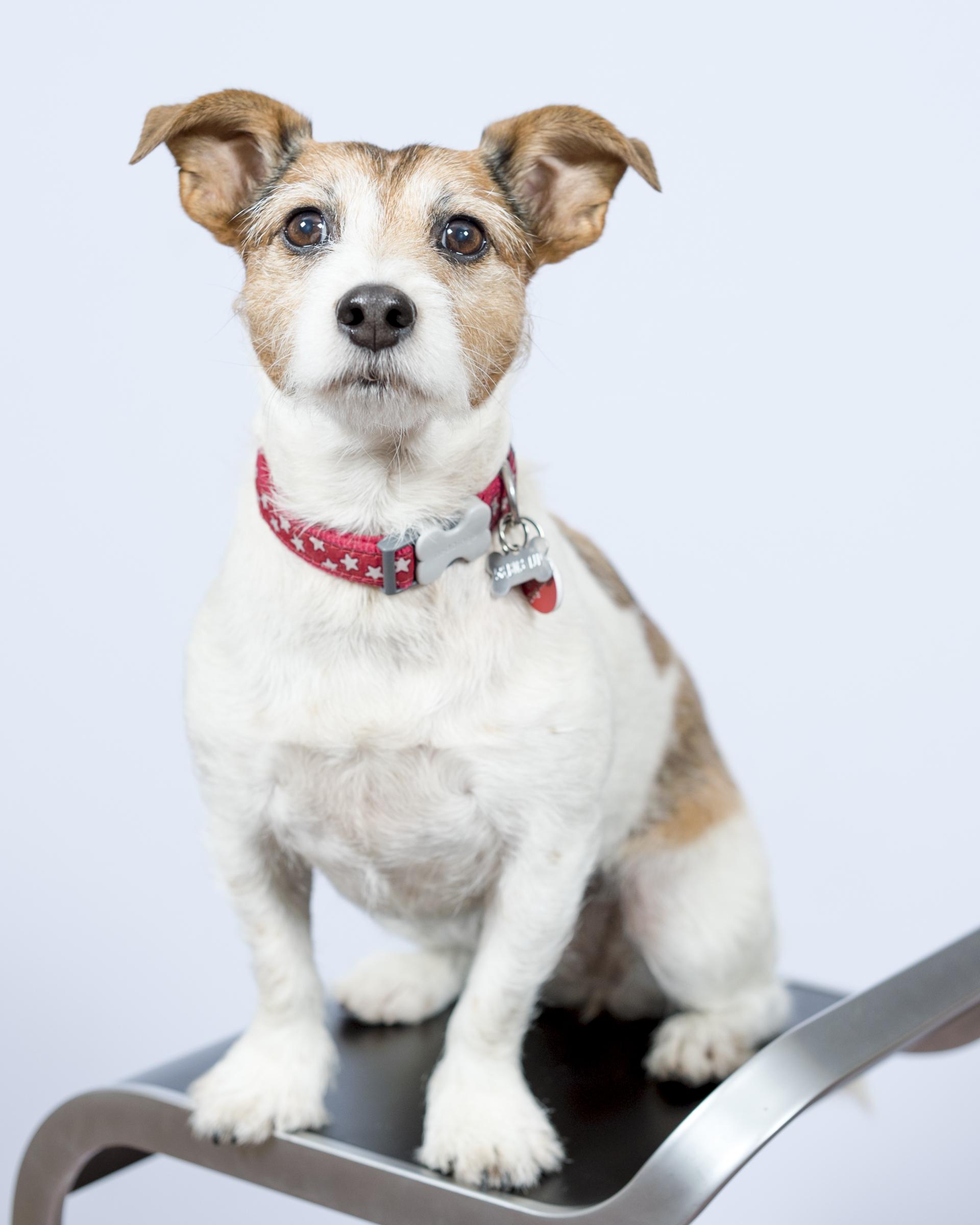 Dottie Rogers, Pet dog & Head of Security.