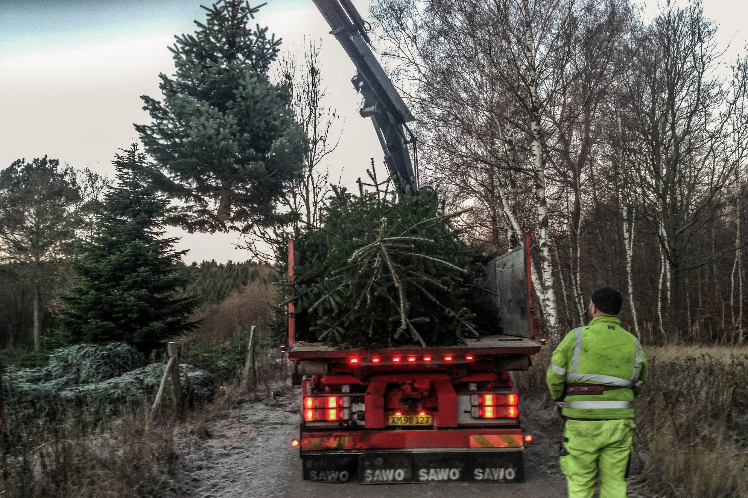 Transport - Professionel håndtering af store træerLevering med Frederiksdals VognmandAfhentning med egen VognmandPriserGode råd