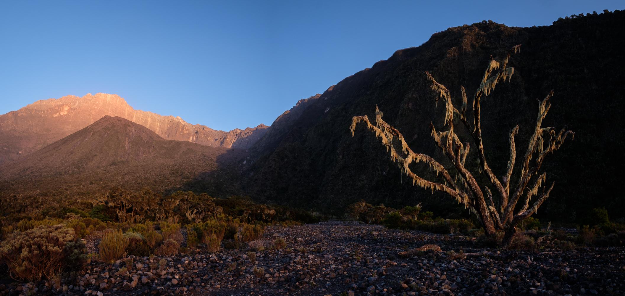 Morning light in Meru's crater, Tanzania.