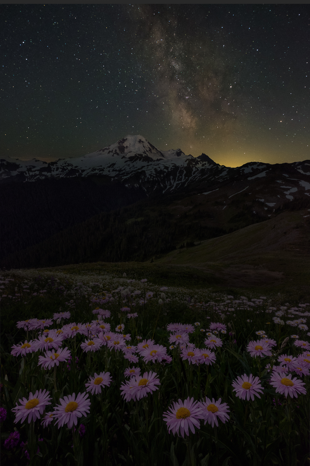 A composite image of asters beneath the summit of Mount Baker and the Milky Way.