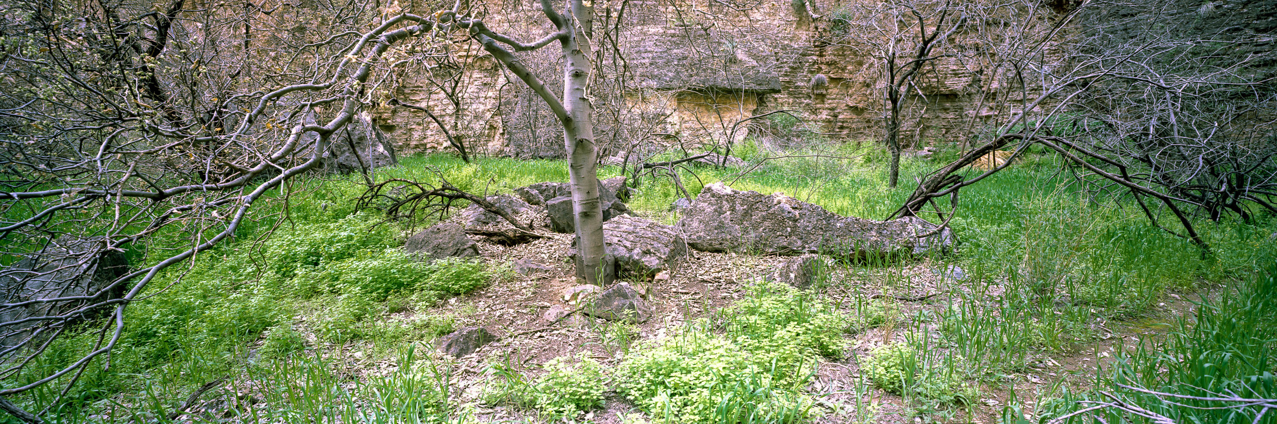 Greenery along the banks of Kanab Creek. Ektar 100, 1sec, f/18.