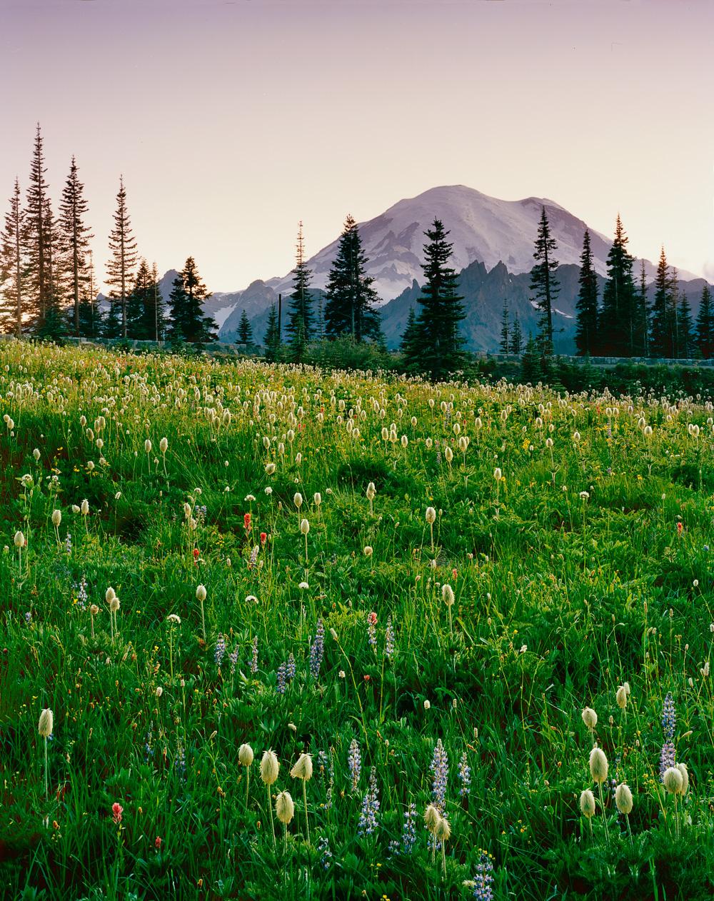 Mount Rainier from Chinook Pass. Ektar 100, 4x5.