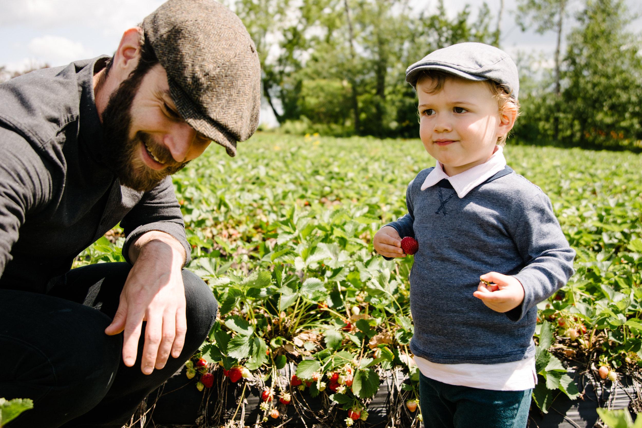photo-d-un-garcon-qui-cueille-des-fraises-avec-son-pere-photographe-famille-lifestyle-montreal-victoriaville.jpg