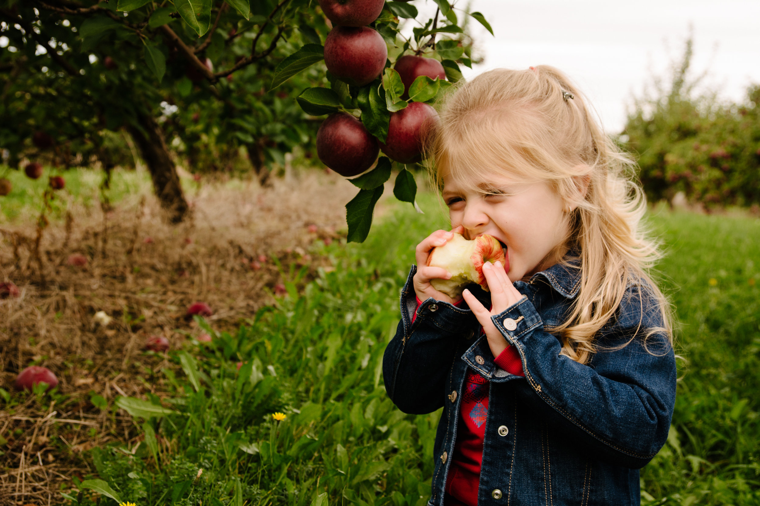 mini-seance-famille-elargie-aux-pommes-verger-des-bois-francs-plessisville-photographe-famille-victoriaville-montreal-25.jpg