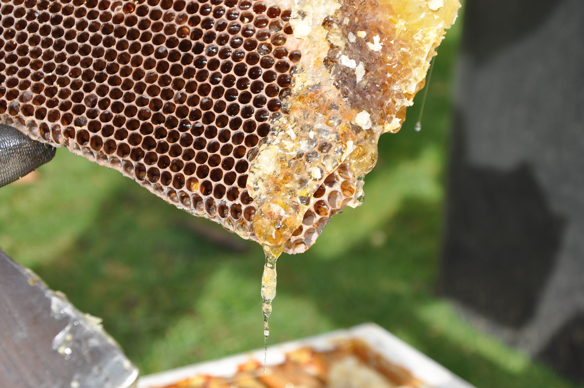 raw-honey-comb-reston-farm-market-va.jpg