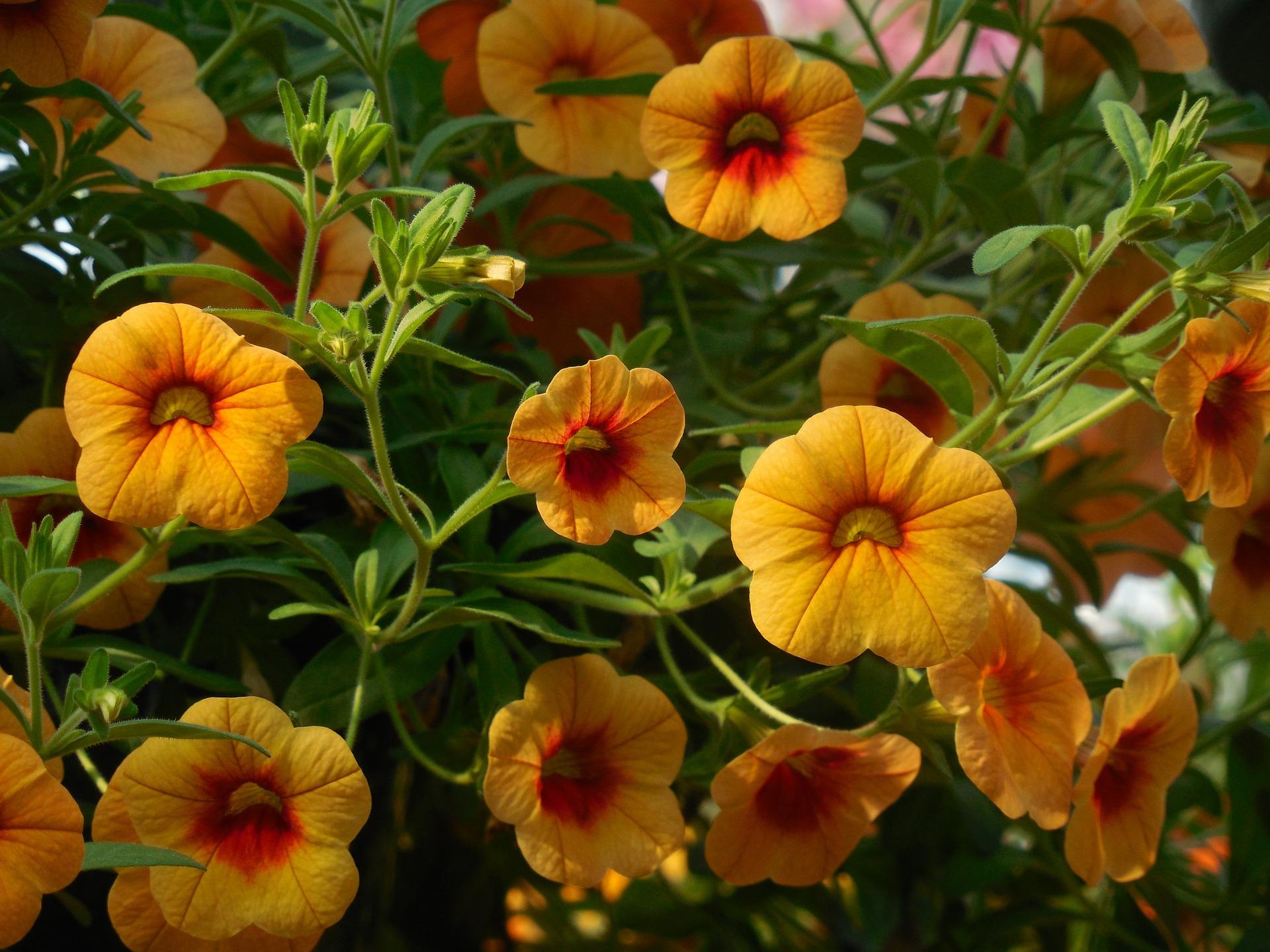 flowers-732783_1920.jpg