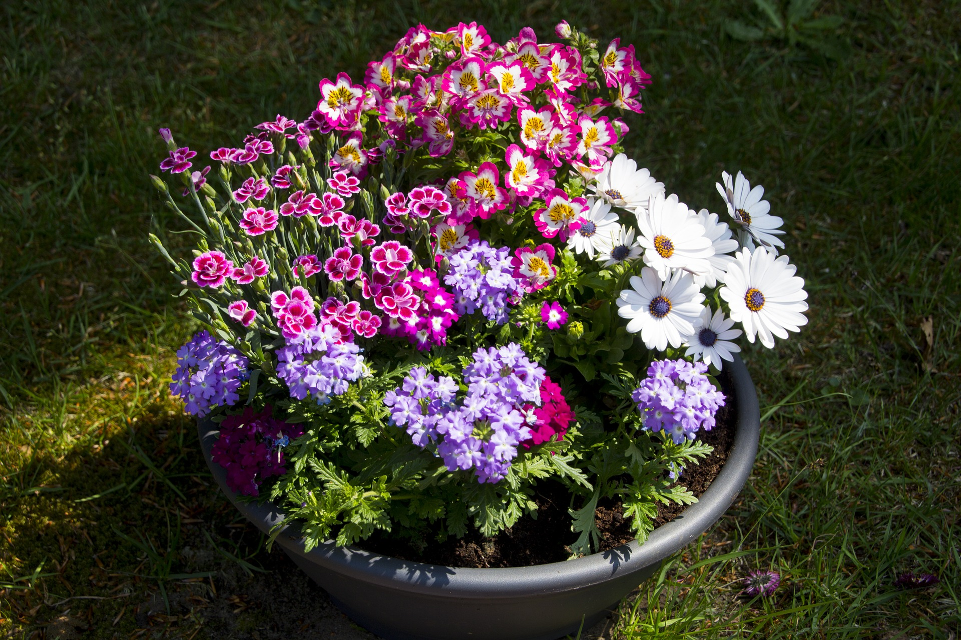 flower-pot-annuals-perennials-reston-farm-market-va.jpg