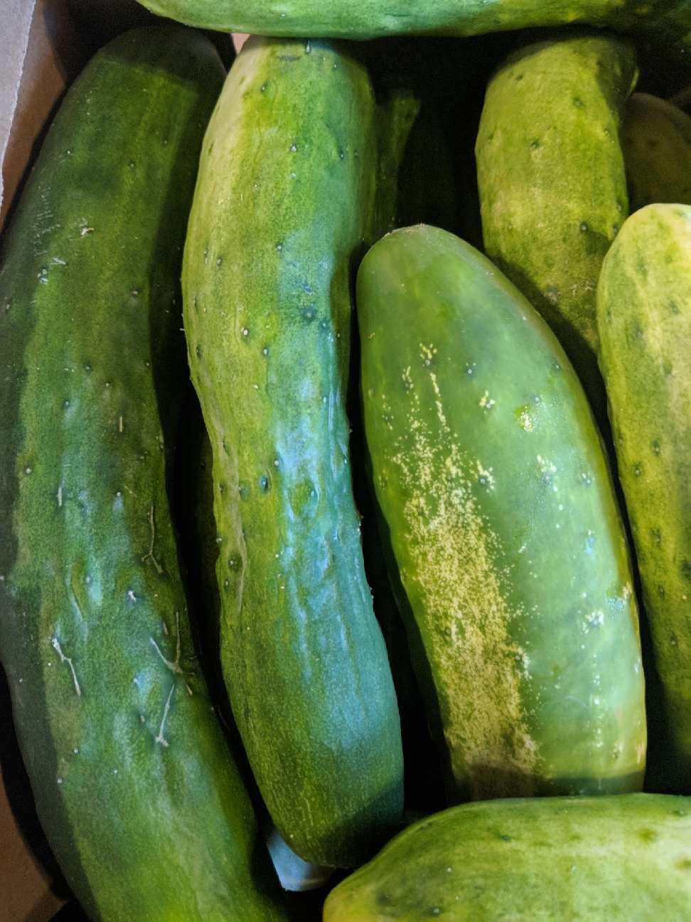 farm-fresh-cucumbers-reston-farm-market-va.JPG