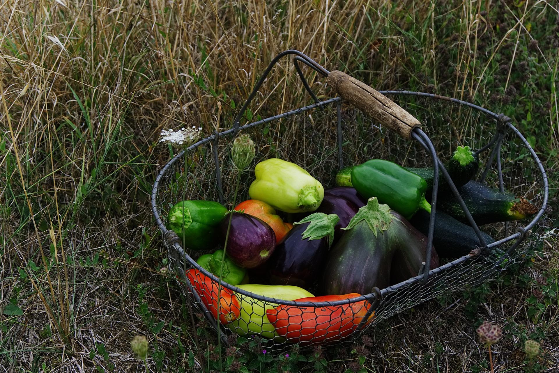 summer-vegetables-reston-farm-market-va.jpg