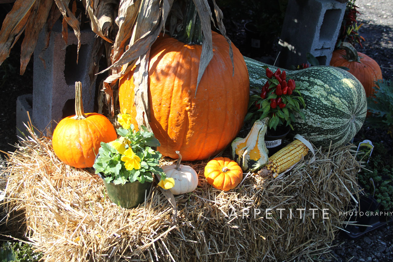 Fall-Festival-Reston-Farm-Market-VA-021.jpg
