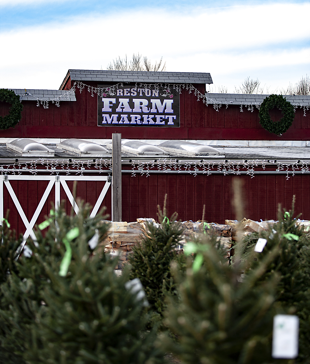 winter-season-christmas-trees-reston-farm-market-va (16).jpg