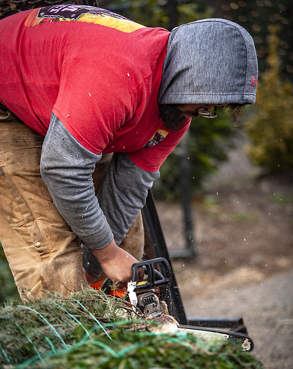 winter-season-christmas-trees-reston-farm-market-va (19).jpg
