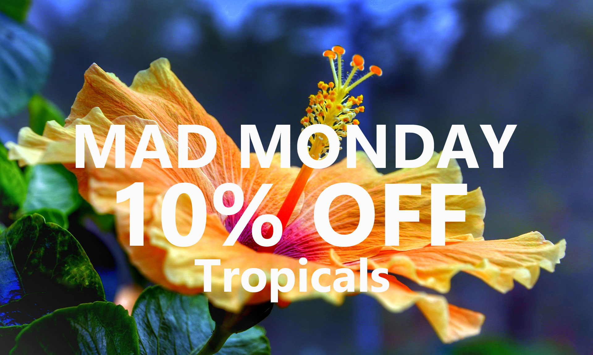Mad-monday-10-percent-off-tropicals-reston-farm-market-va.jpg
