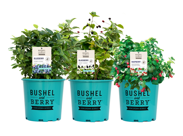 Bushel-and-berry.png