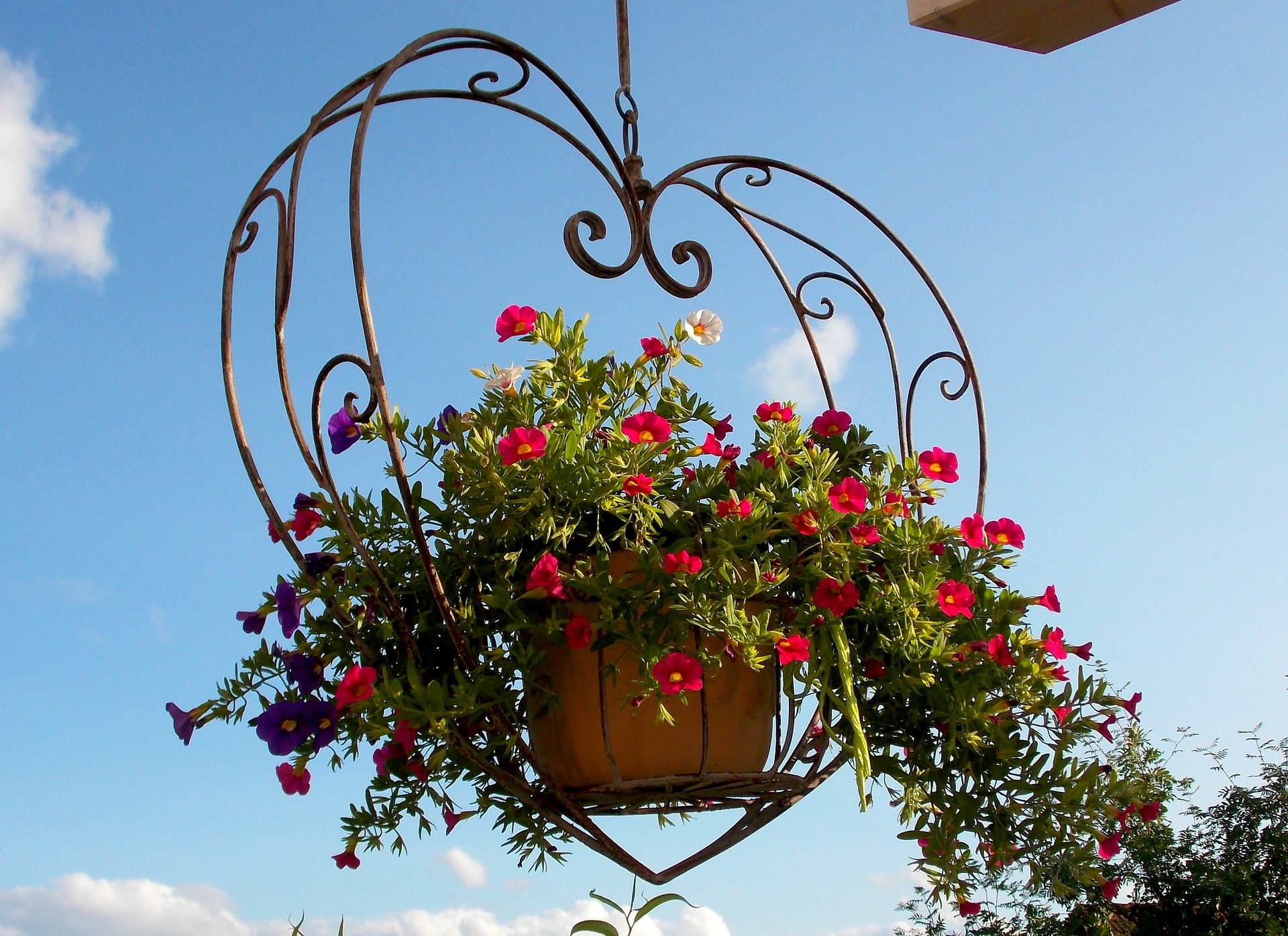 hanging-flower-basket-reston-farm-market-va.jpg