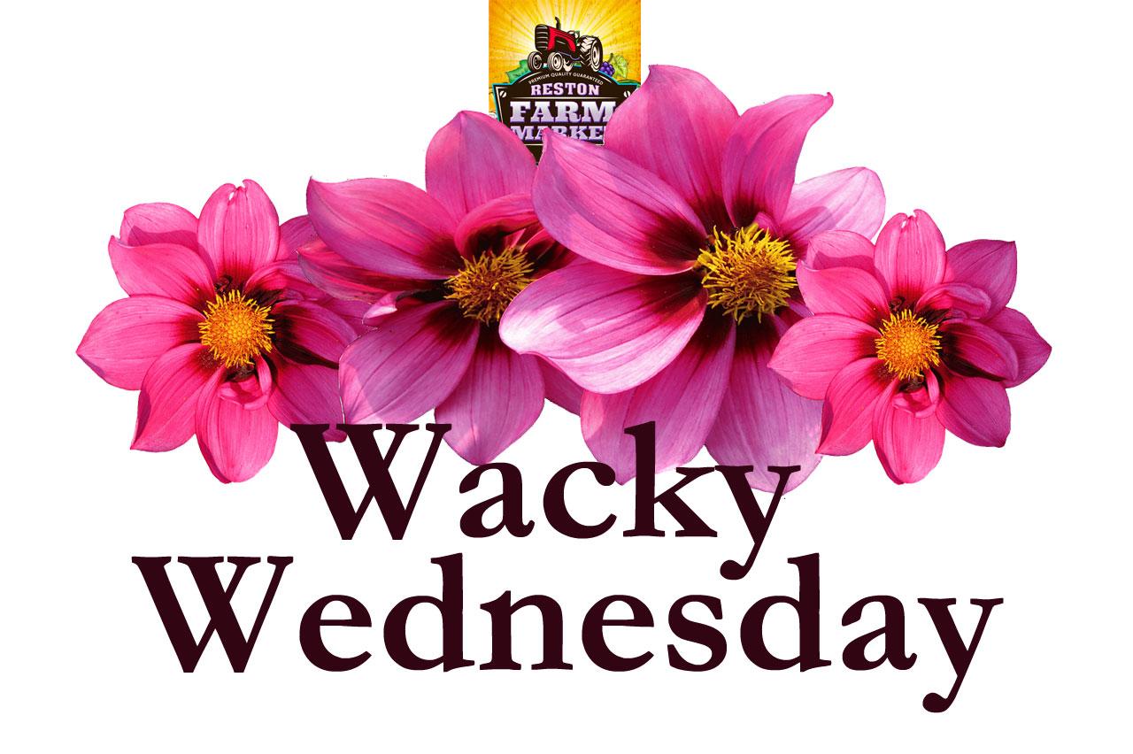 Wacky-Wednesday-V4.jpg