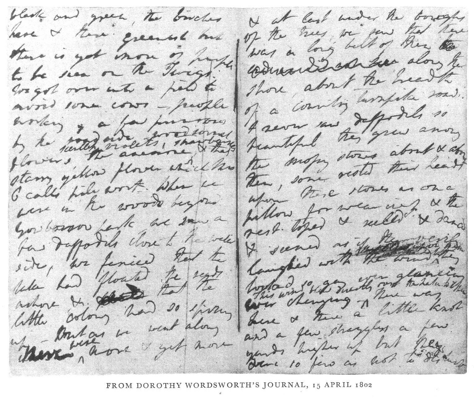 Dorothy Wordsworth's Journal, 15 April 1803 (via Numero Cinq Magazine)