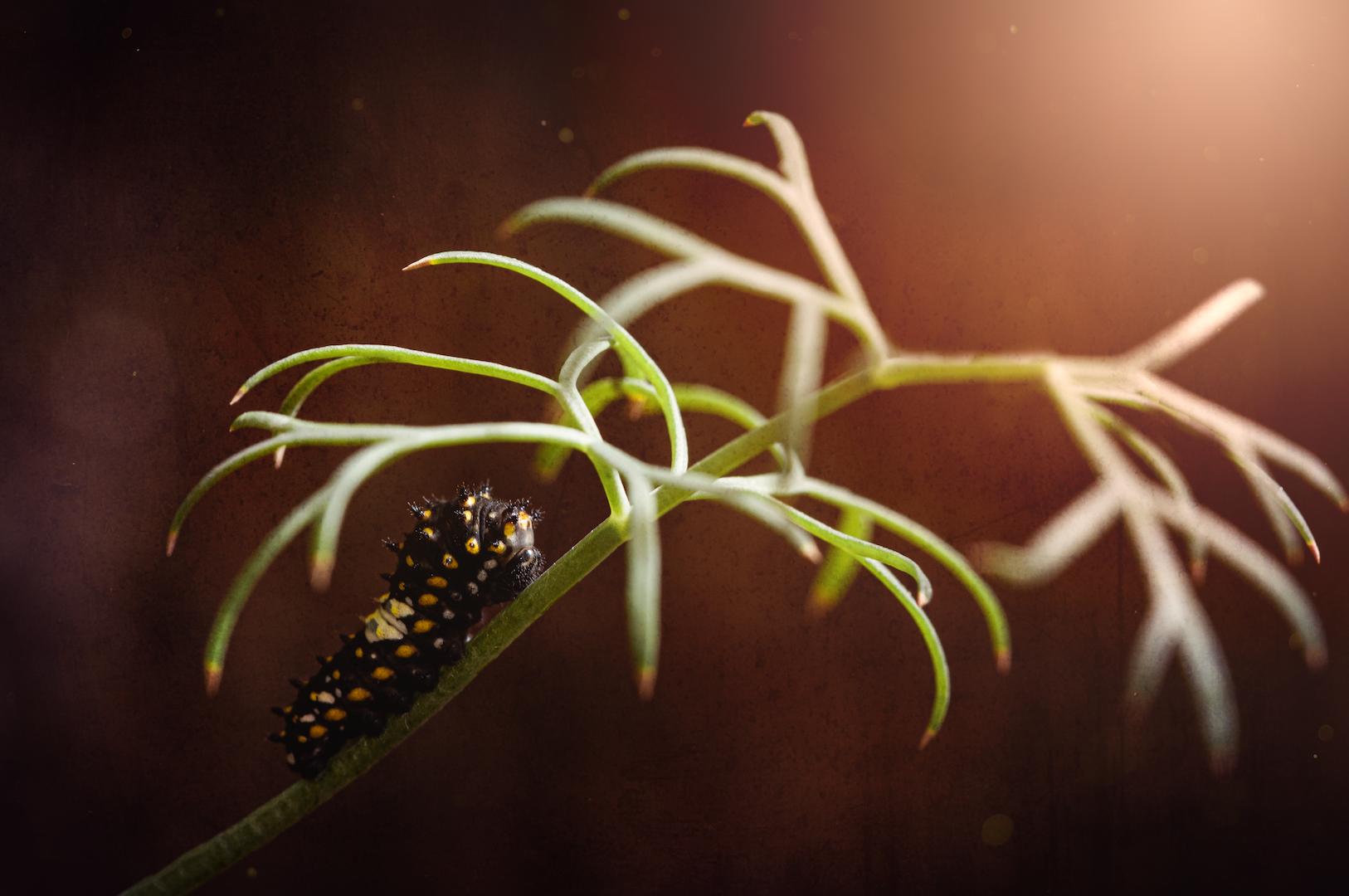 caterpillar PS edit.png