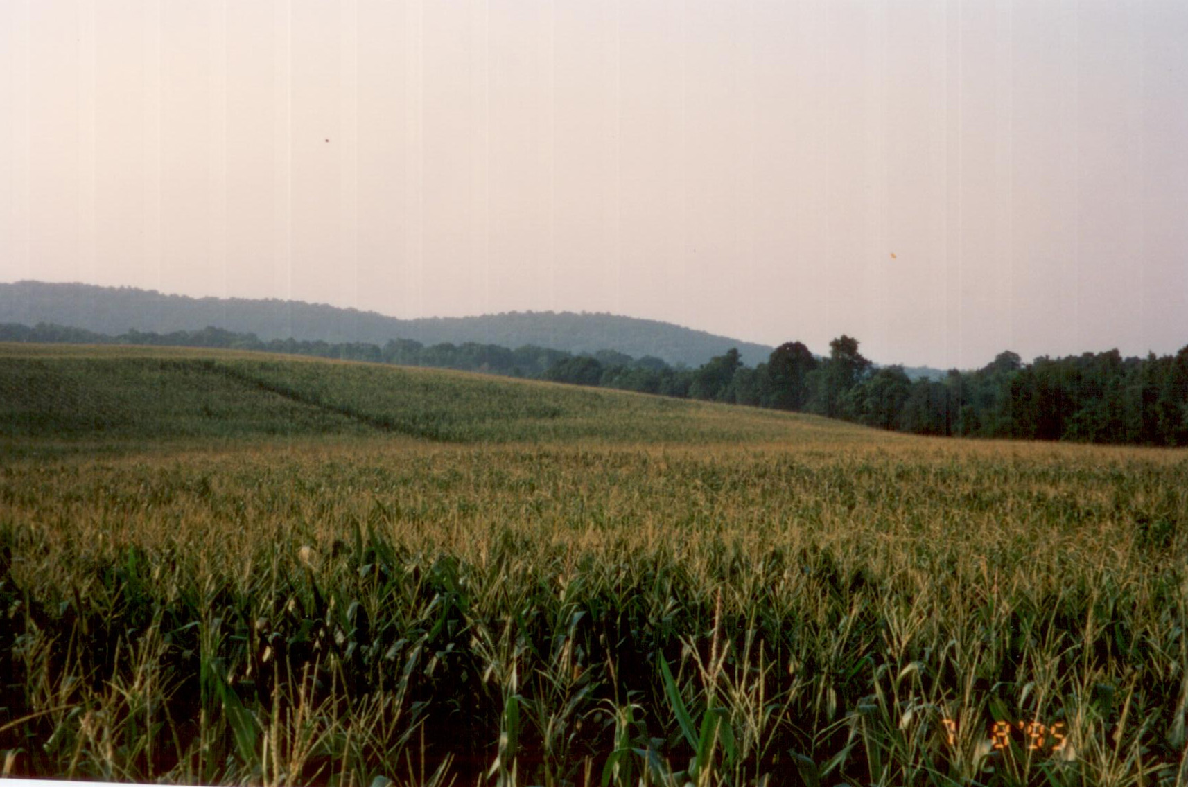 FARM CONSTRUCTION (3).jpg