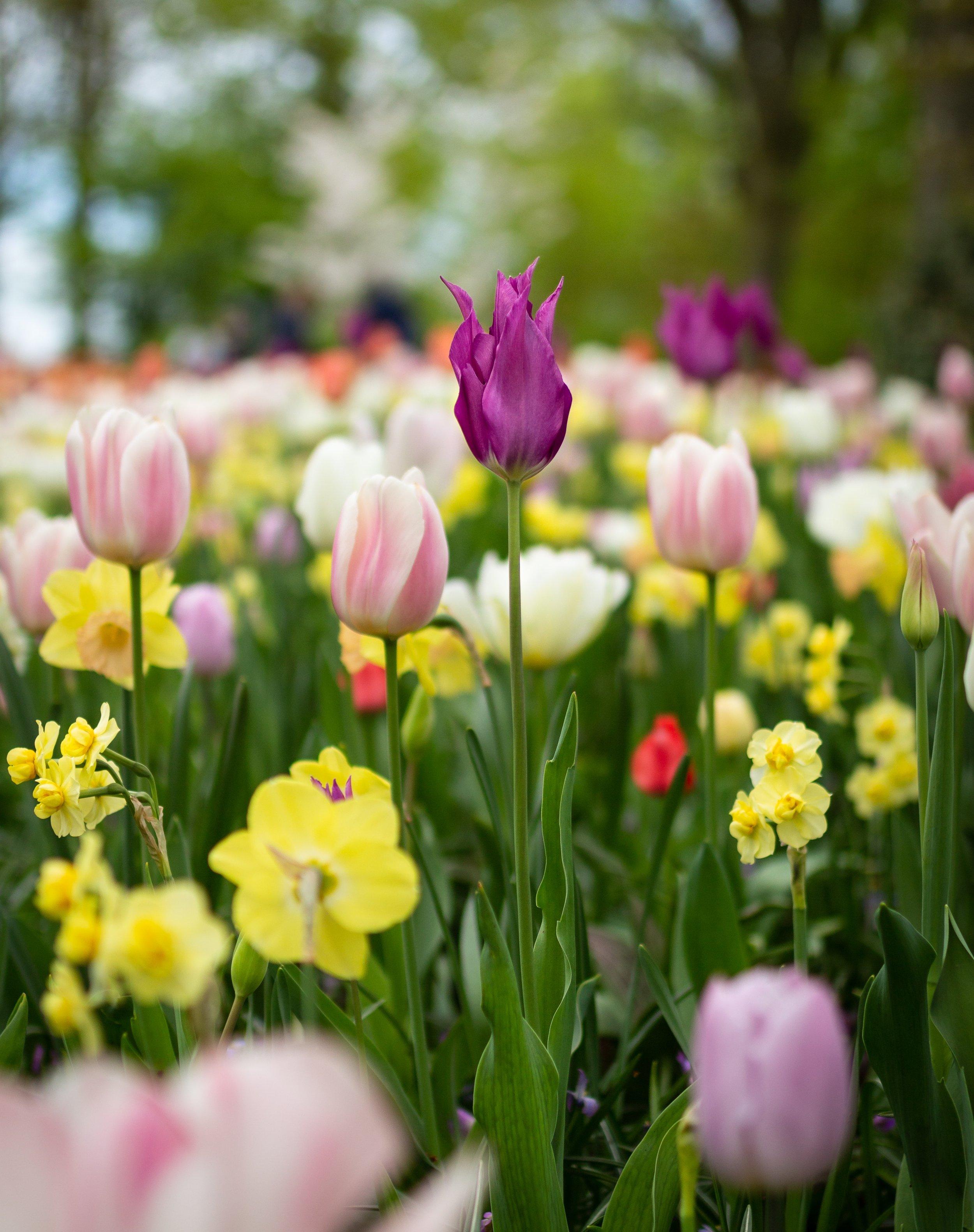beautiful-flowers-blooming-bouquet-1076607.jpg