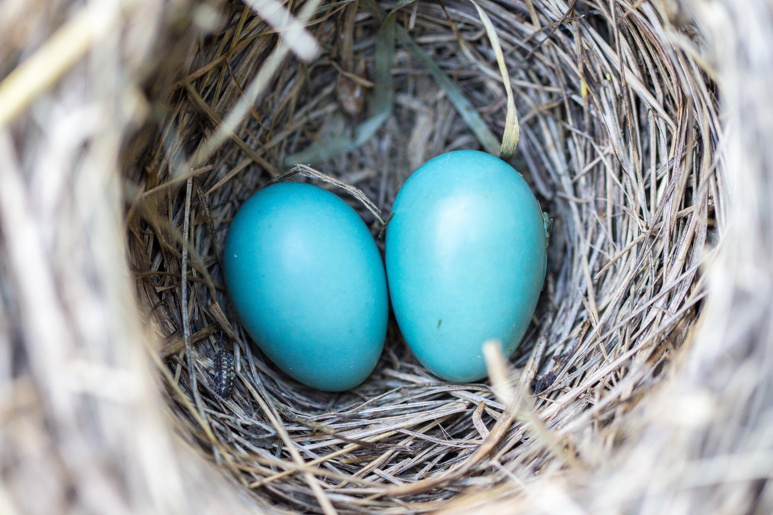avian-bird-nest-birth-158734.jpg