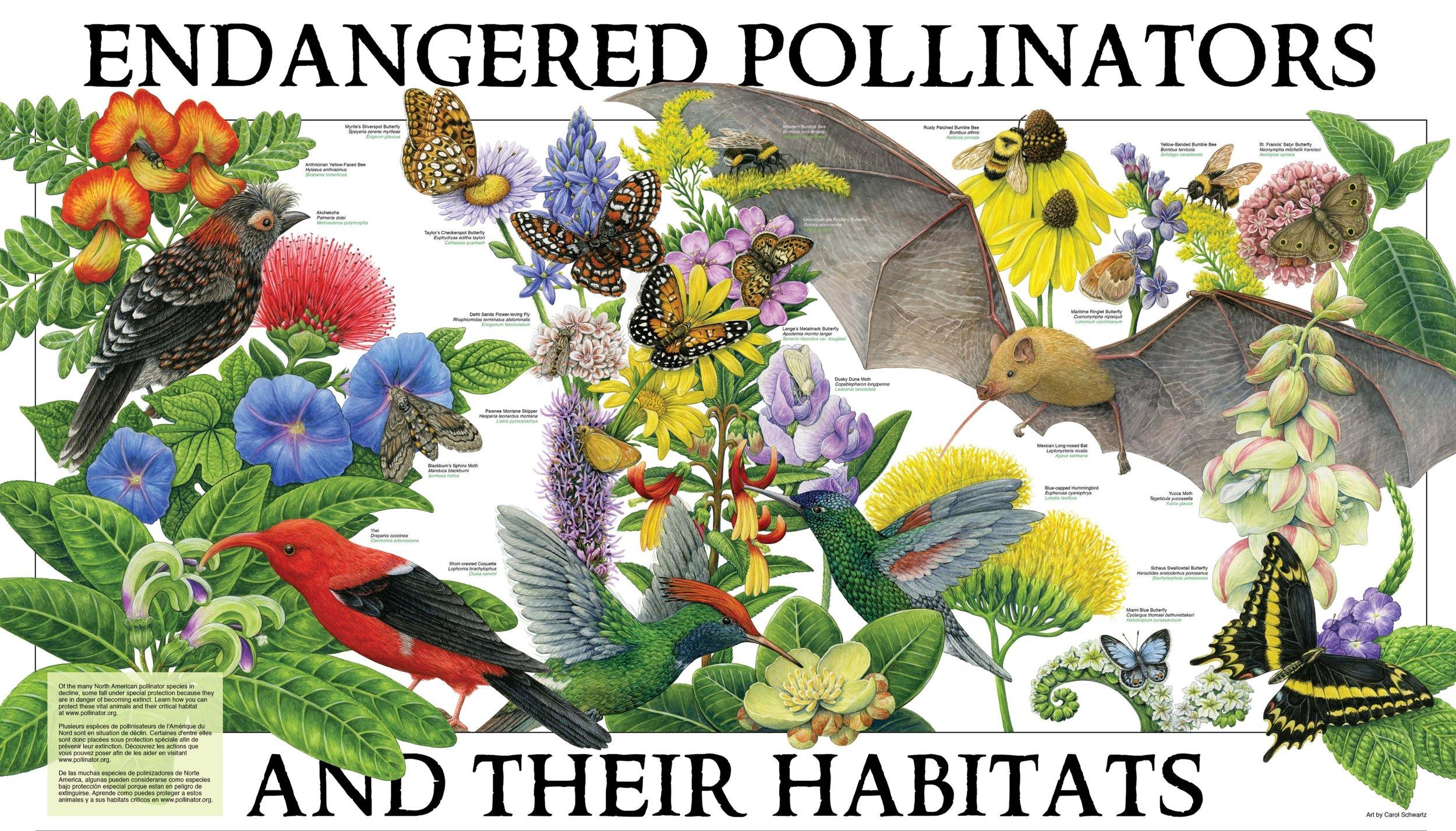 Source:  Pollinator Partnership
