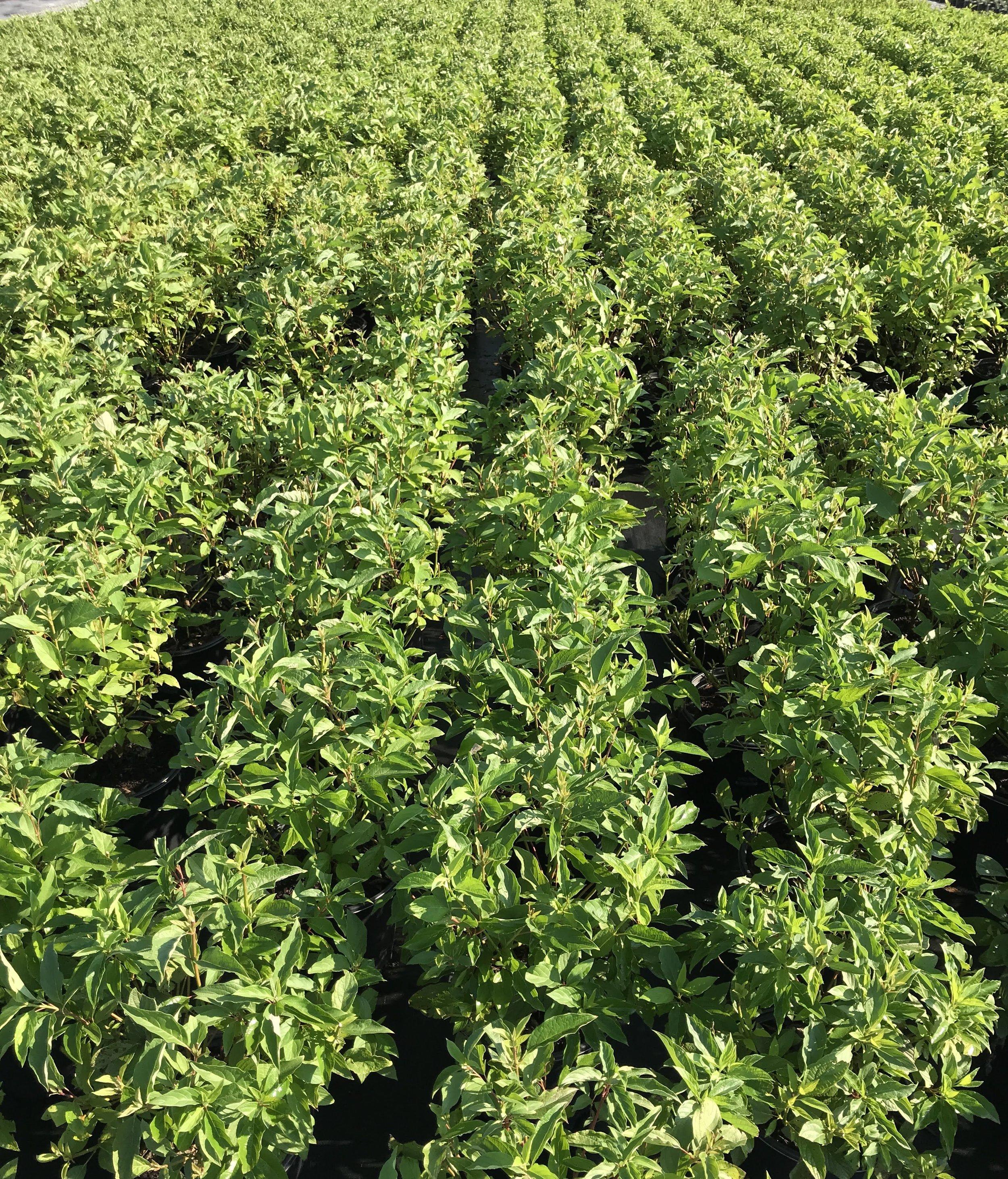 3 gallon crop