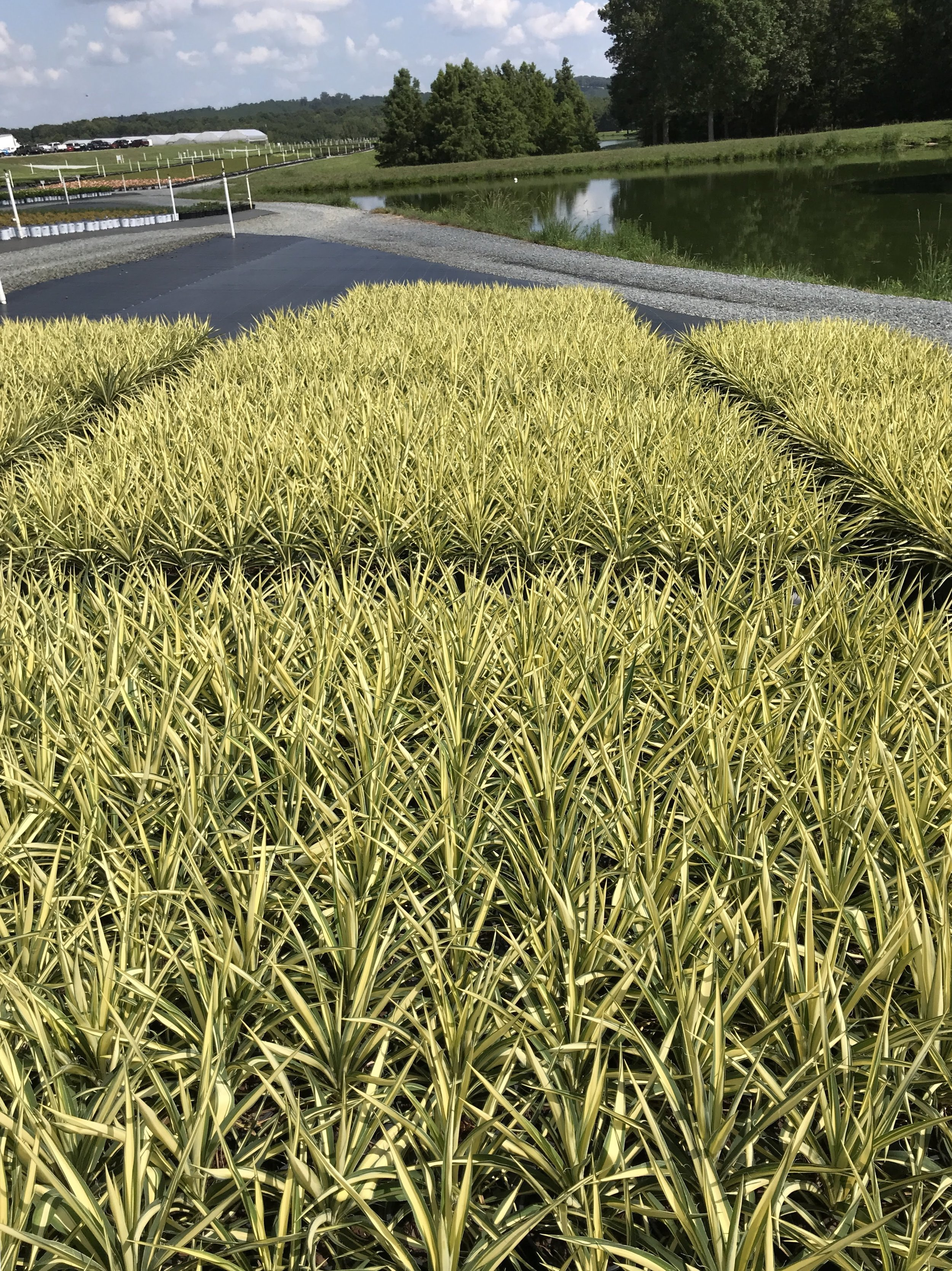 1 gallon crop