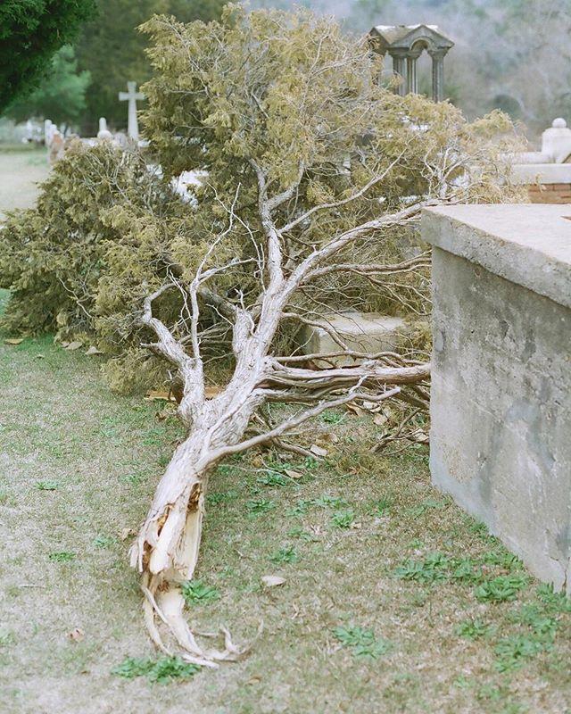 Rose Hill cemetery. #cinestill50d