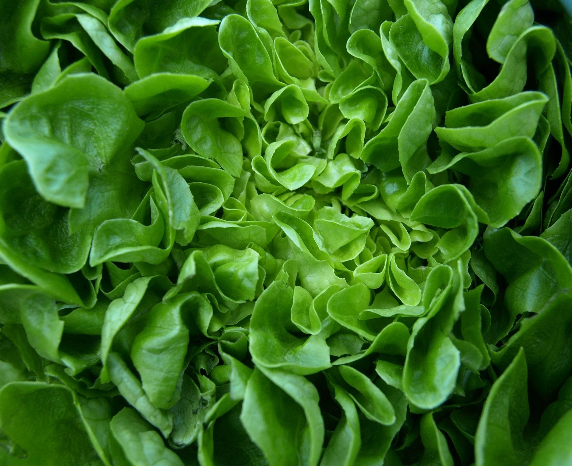 salad-346250_1920.jpg