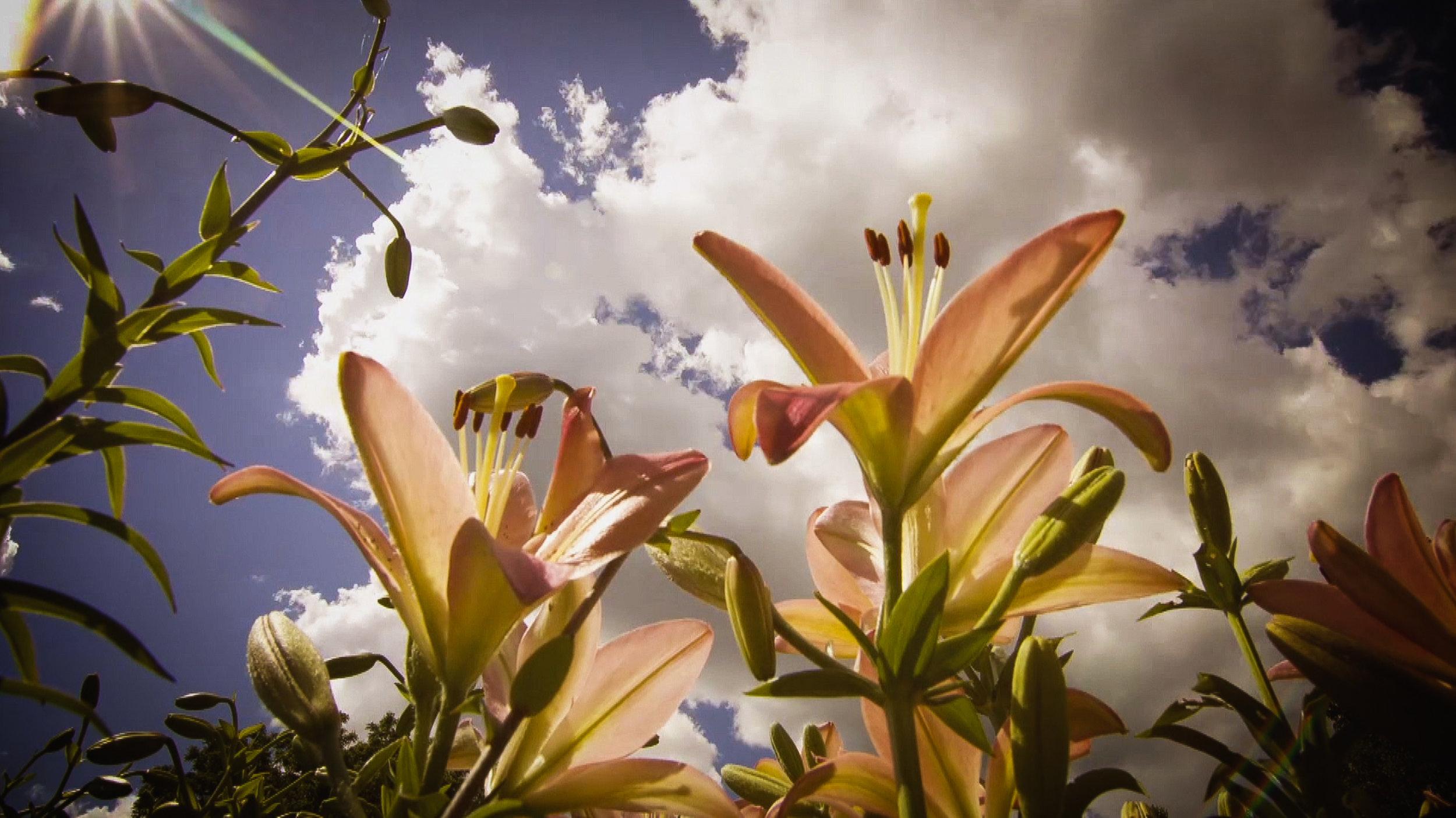 Jardins Screen shots-1.jpg