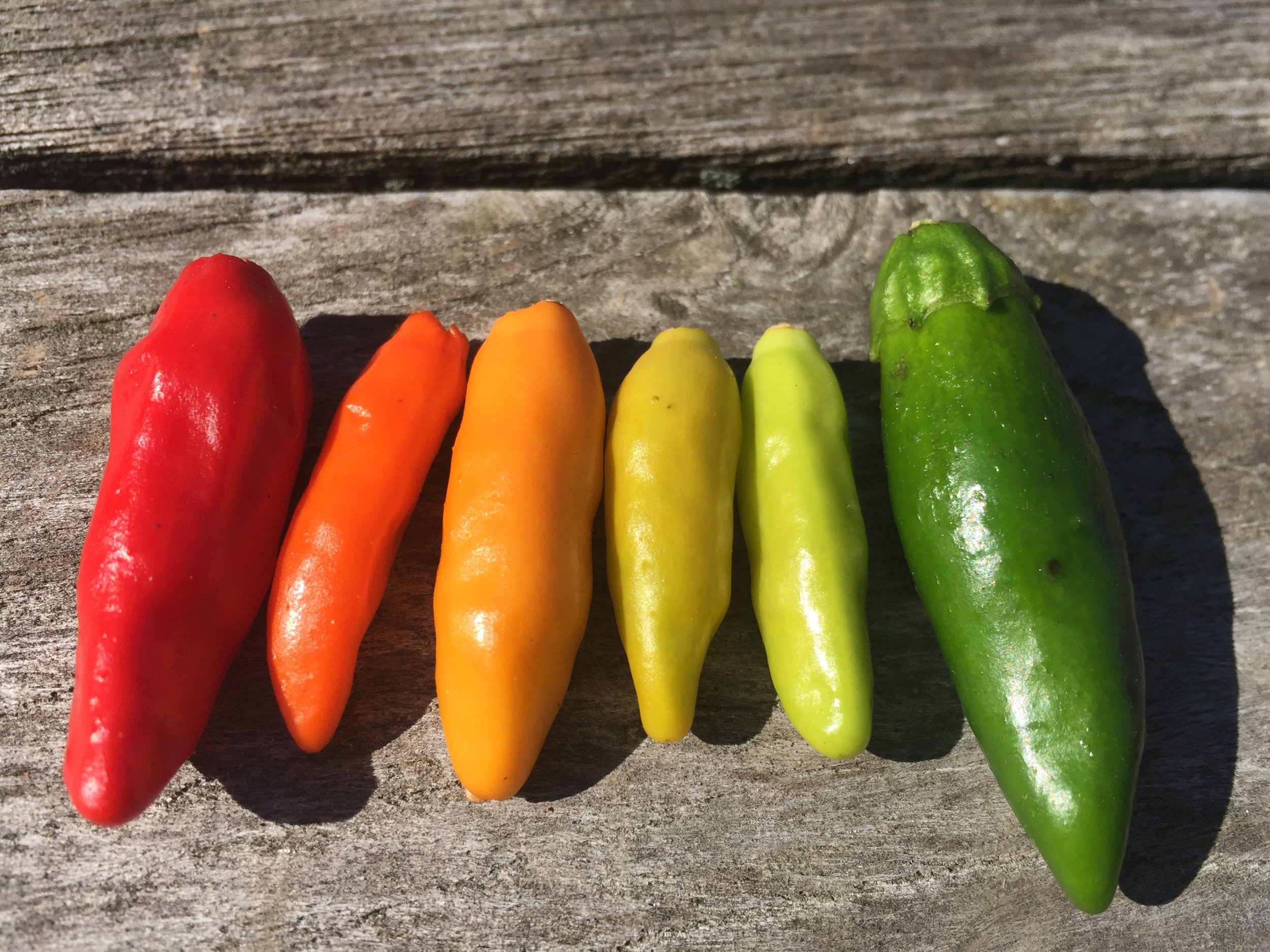 fire cider rainbow peppers 2018.jpg