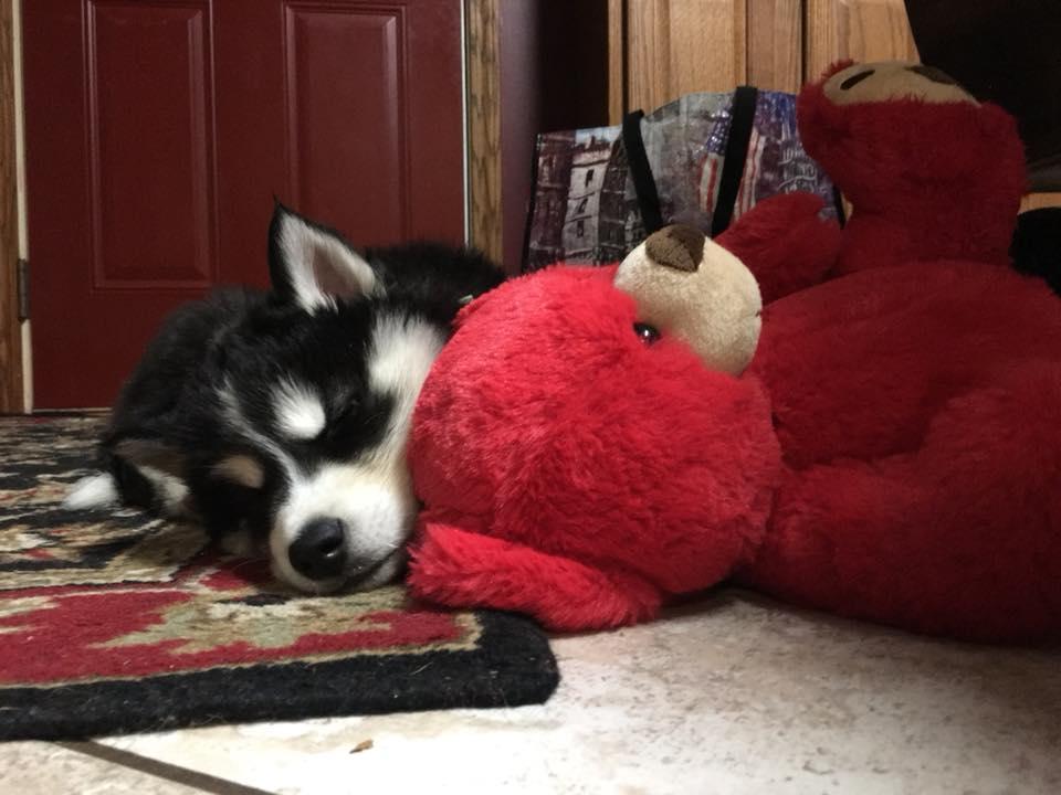 Kea with her favorite bear