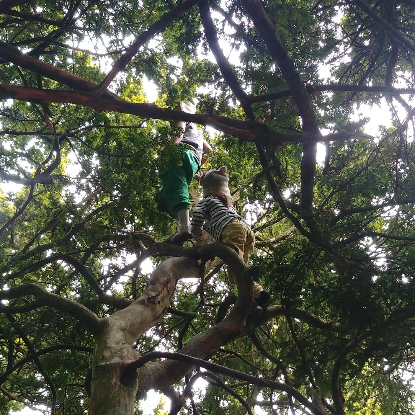 A couple of little tree-climbing monkeys.
