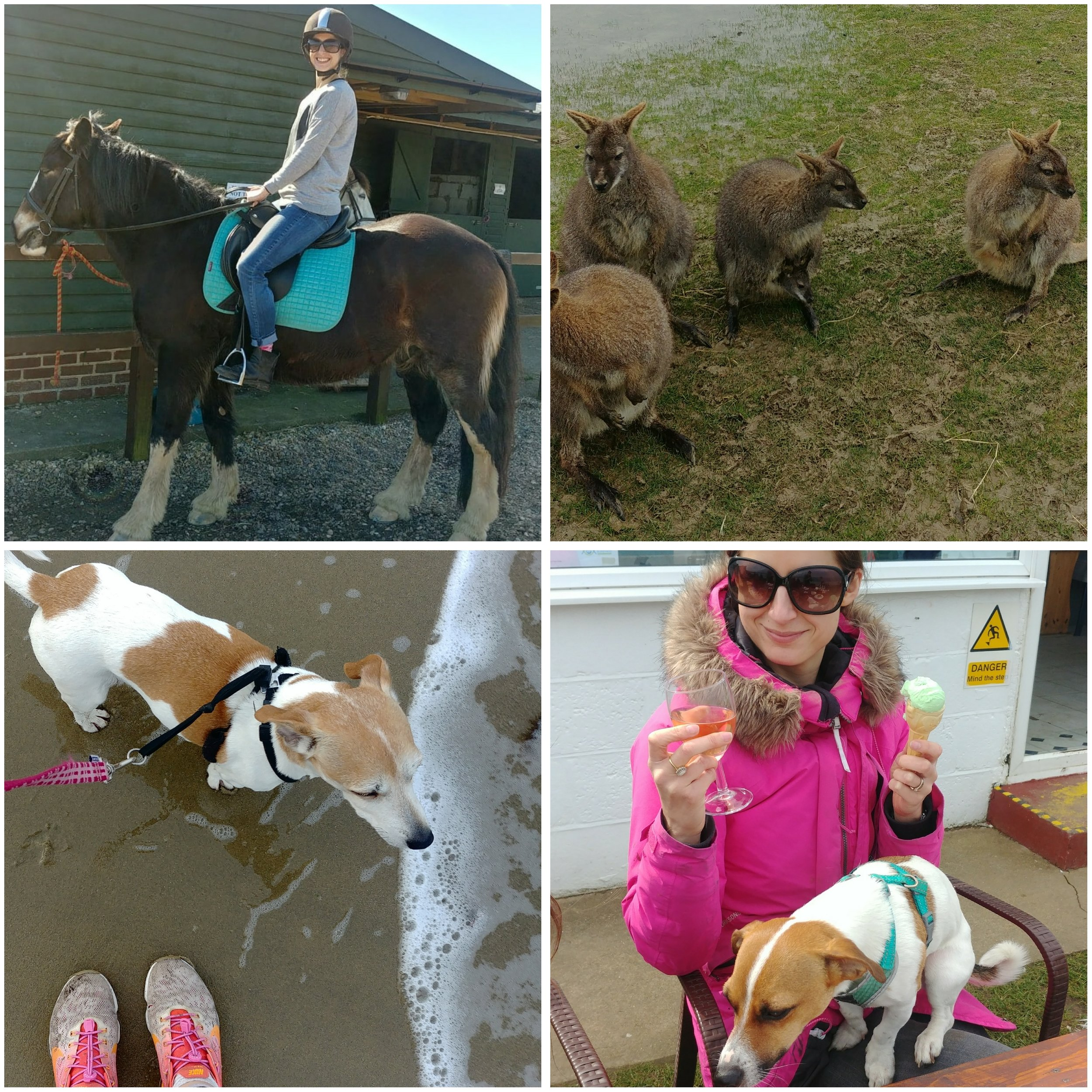 My first ever time on a horse (pony?), wallabies at Tapley Farm (can you see the baby? Nature is ace), running with my partner on the beach, and having beachside snacks with naughty Cookie puppy.