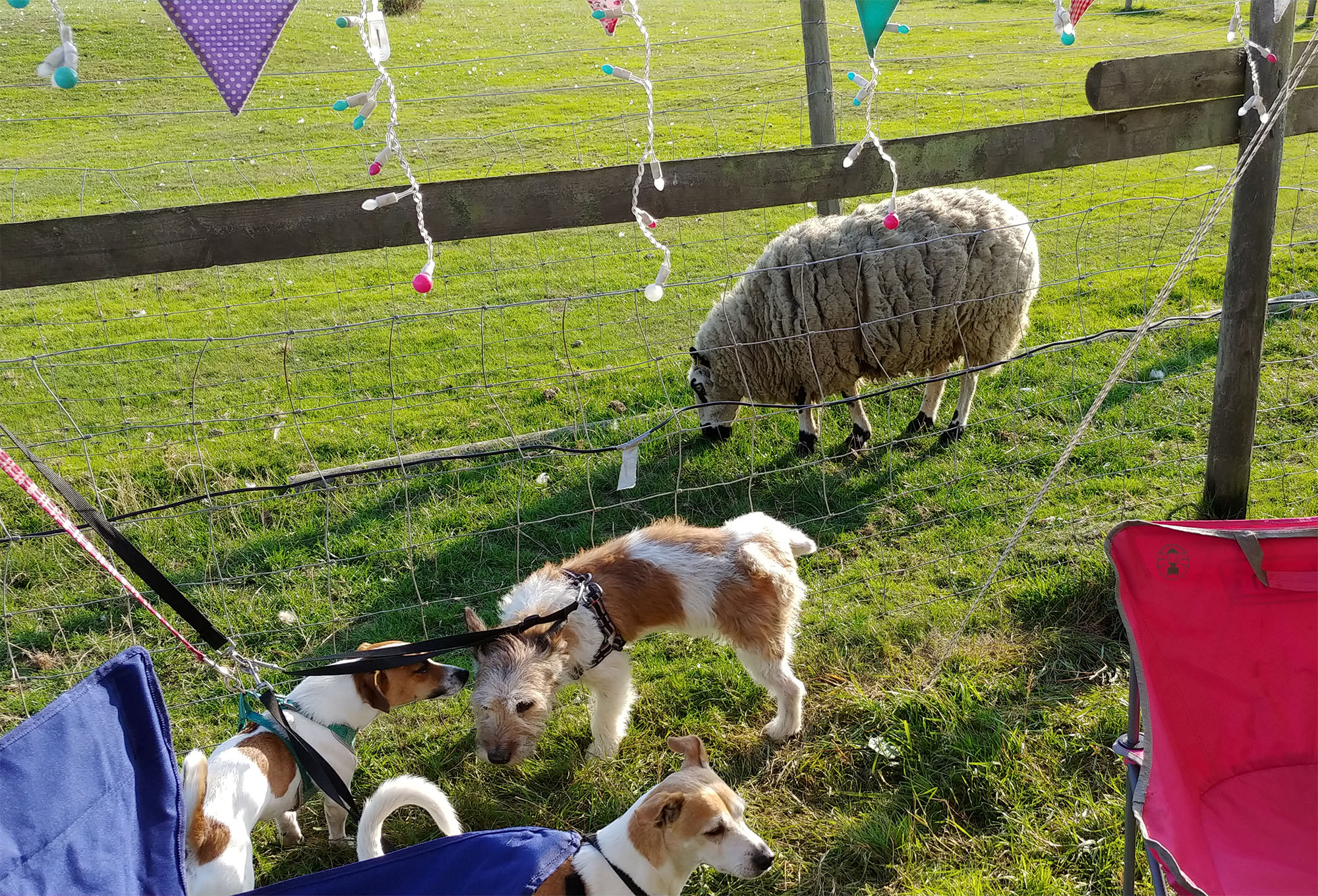 We were a bit worried about how the dogs would react to having farm animals so close by (this is literally outside the tent door as you can see, albeit separated by a wire fence) but all that happened was Enrique tried to lift his leg on a sheep :-)
