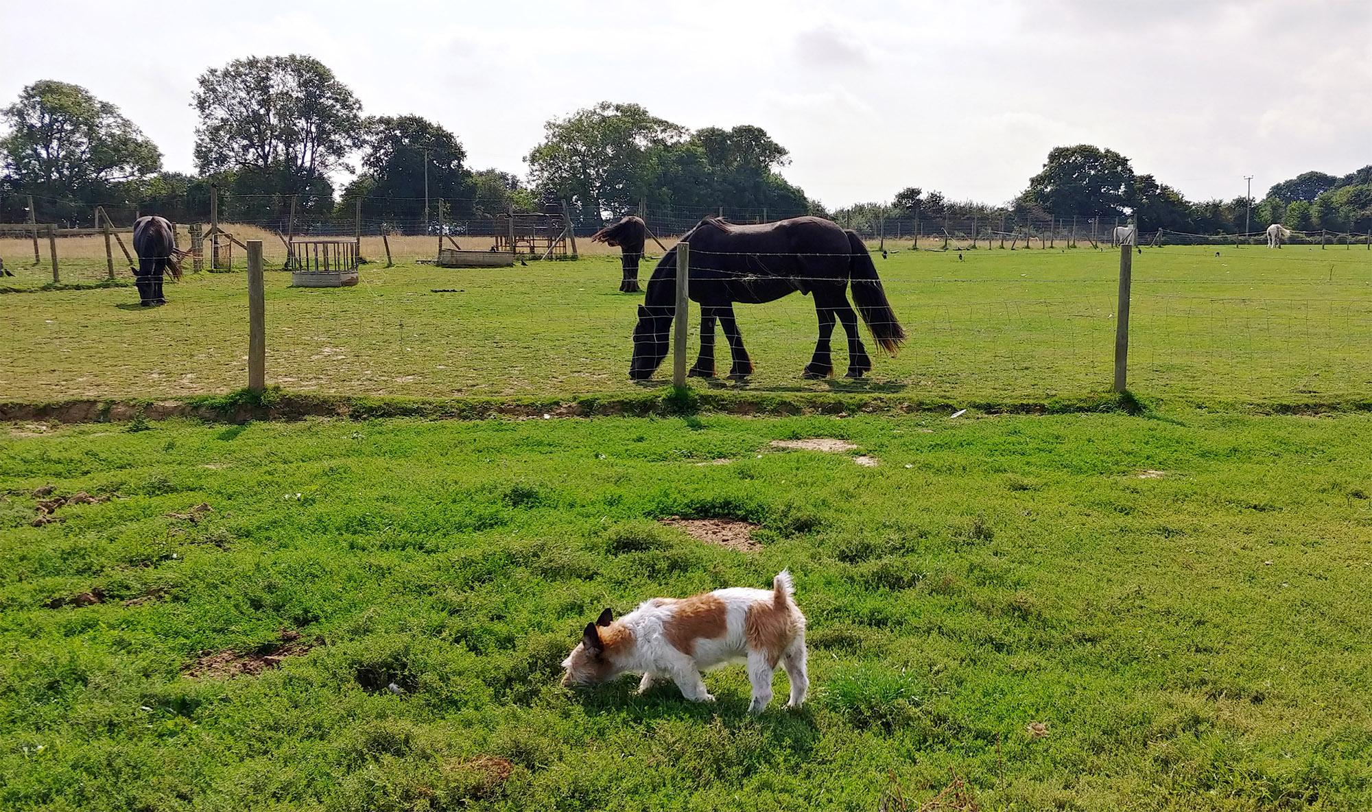 Big furry Rixy strollin' around the field.