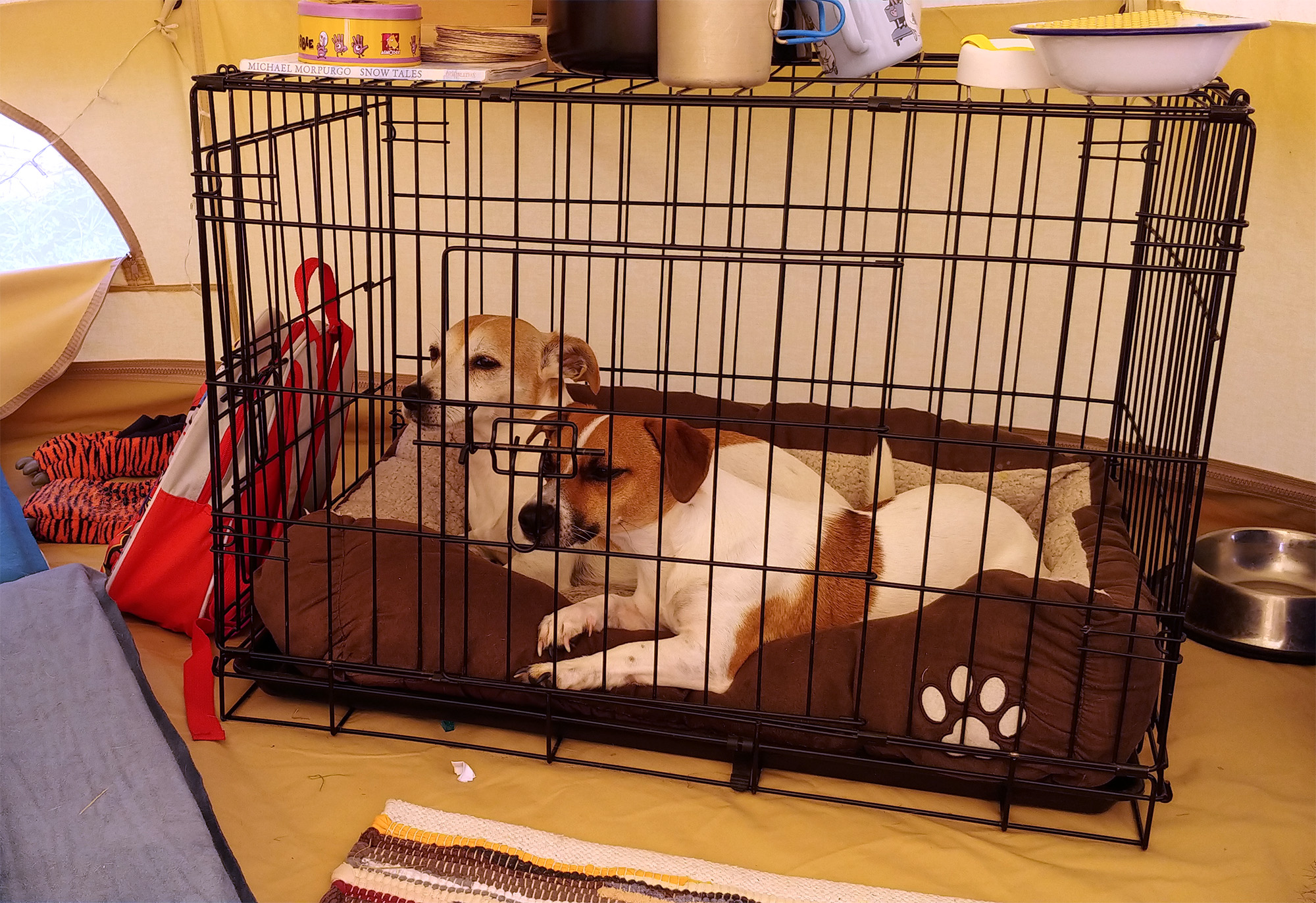 Having three over-excited dogs romping round and round a circular open plan tent isn't always ideal, so we brought our crate with us for the smaller two to have some quiet time in.