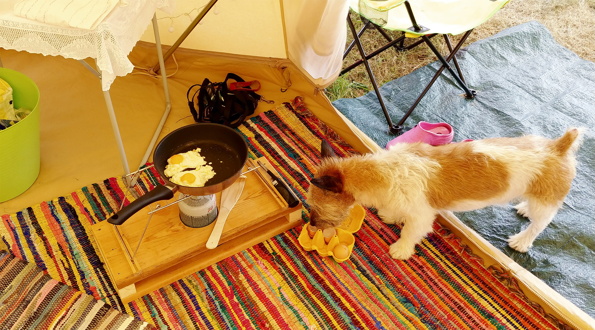 Frying eggs for breakfast, with the help of a naughty furry cleaner-upper.
