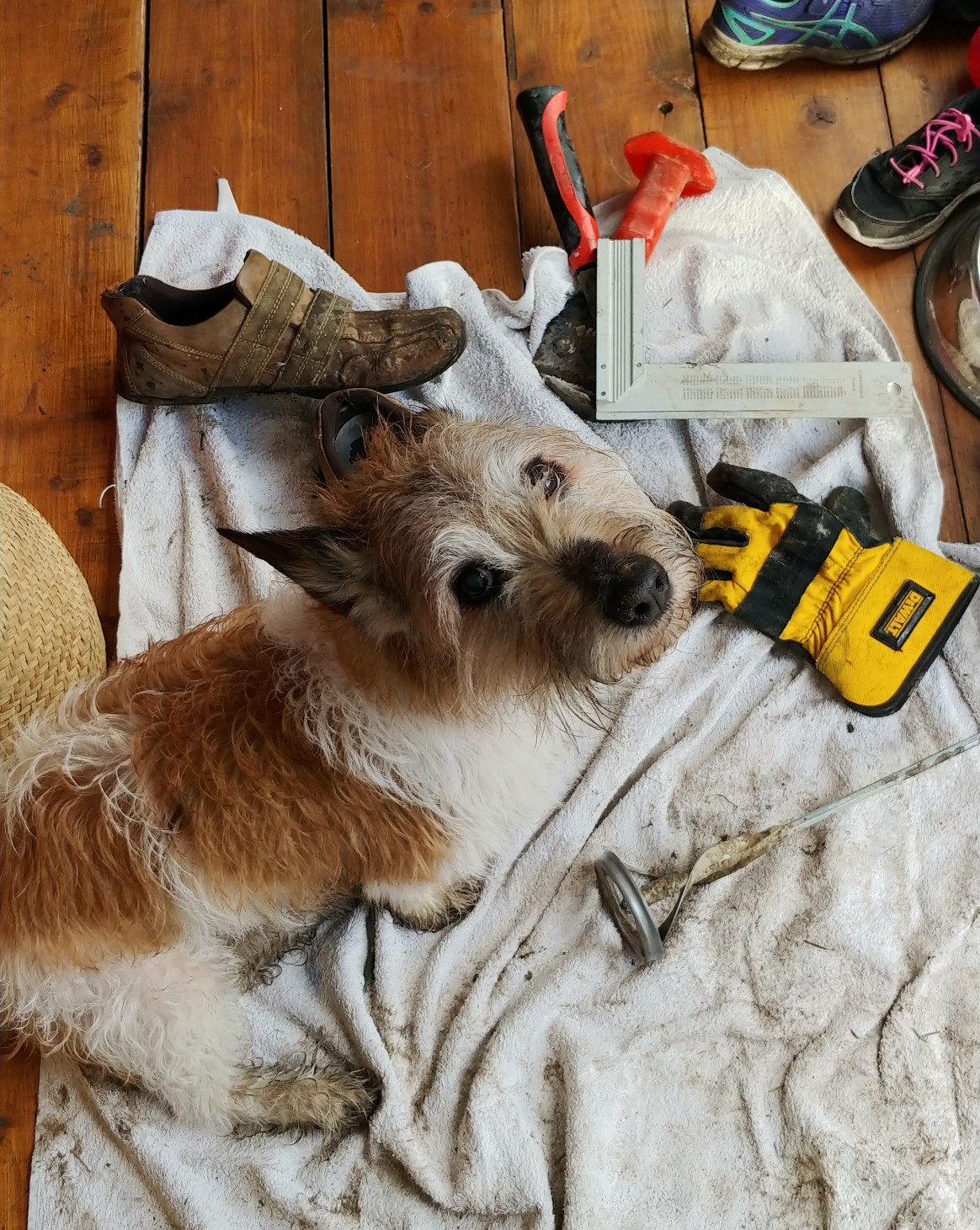 Every time it rained, we repaired indoors with a filthy Jack Russell.