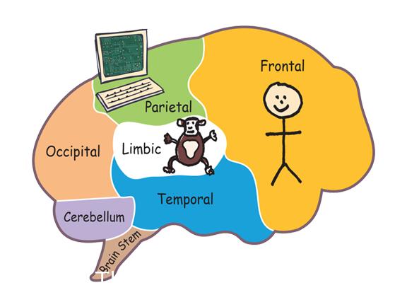 The chimp management model depicted by Professor Steve Peters.