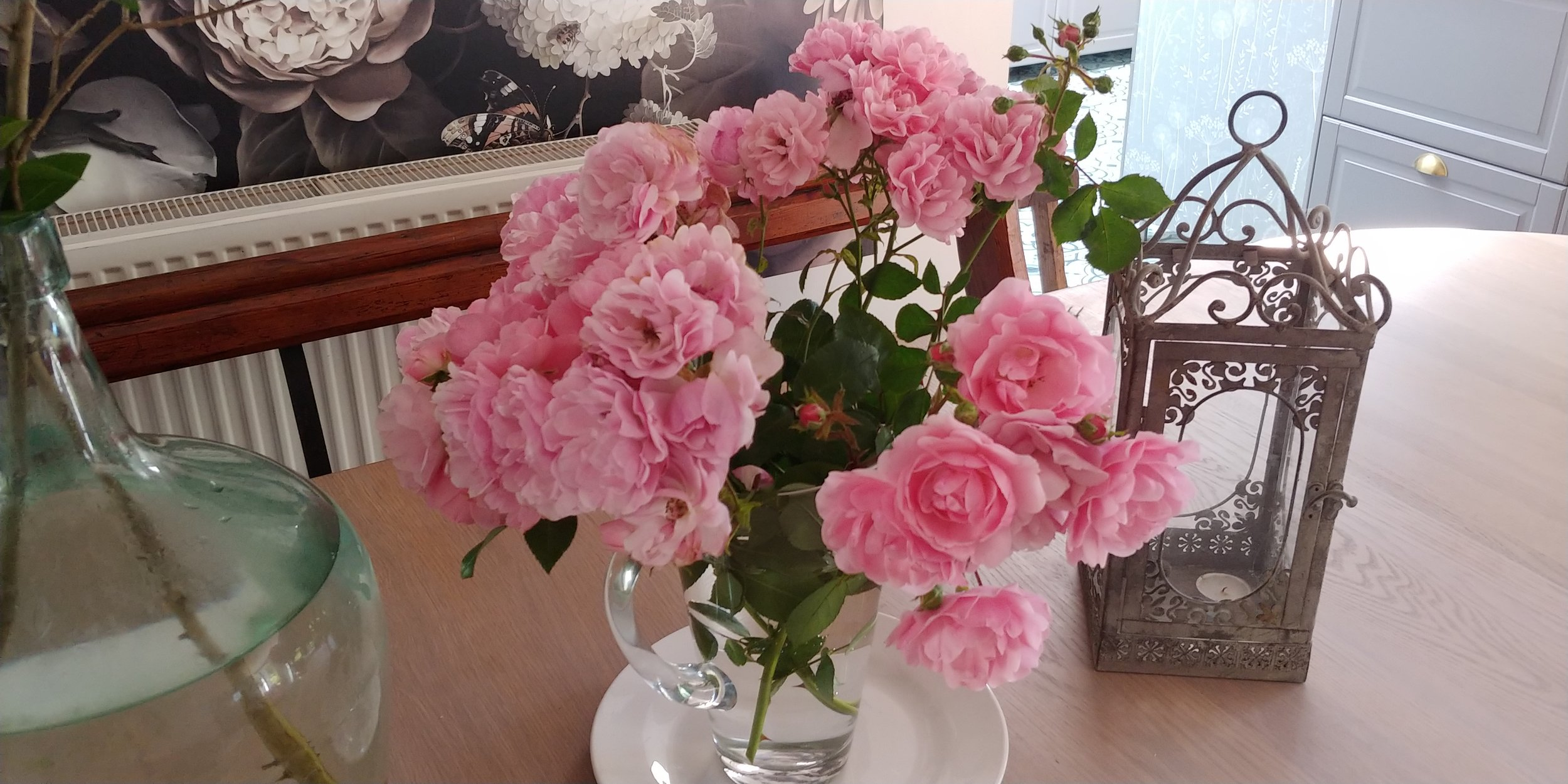 These gorgeous roses are from our neighbour's front garden.