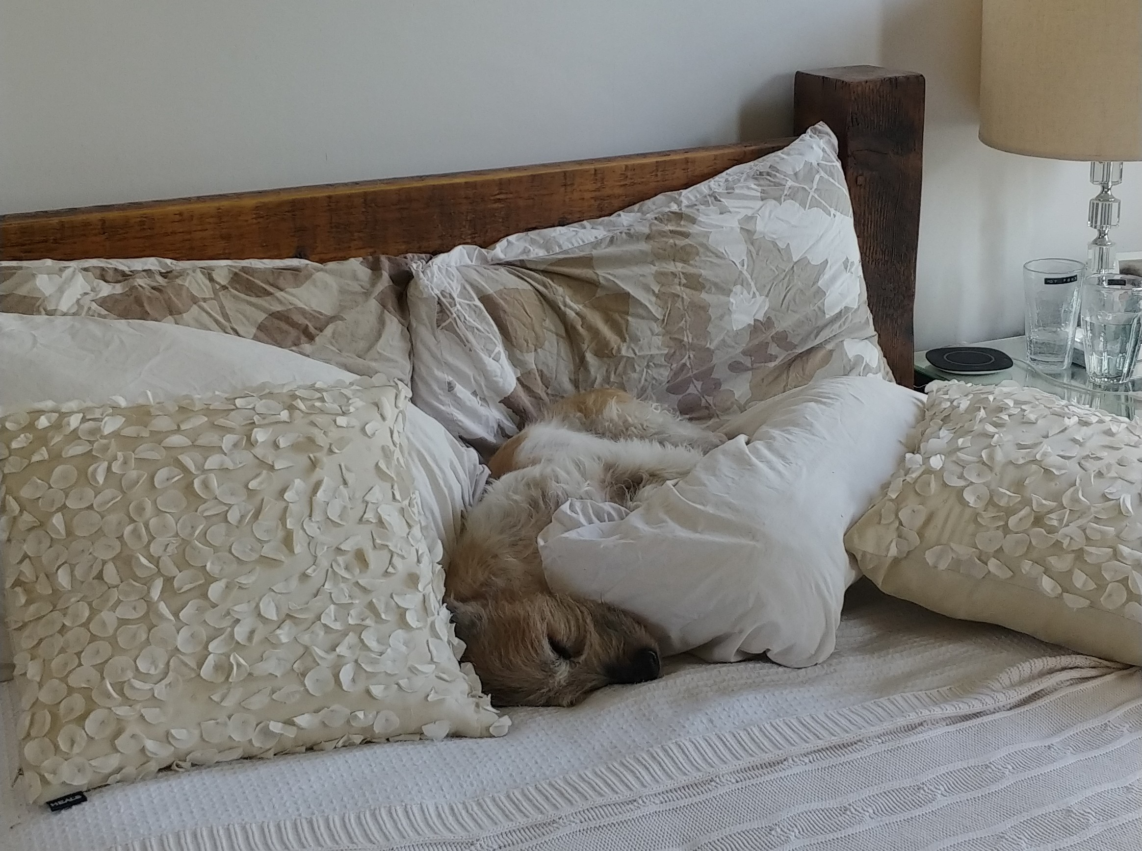 Mr Enrique doesn't understand about pillow styling.