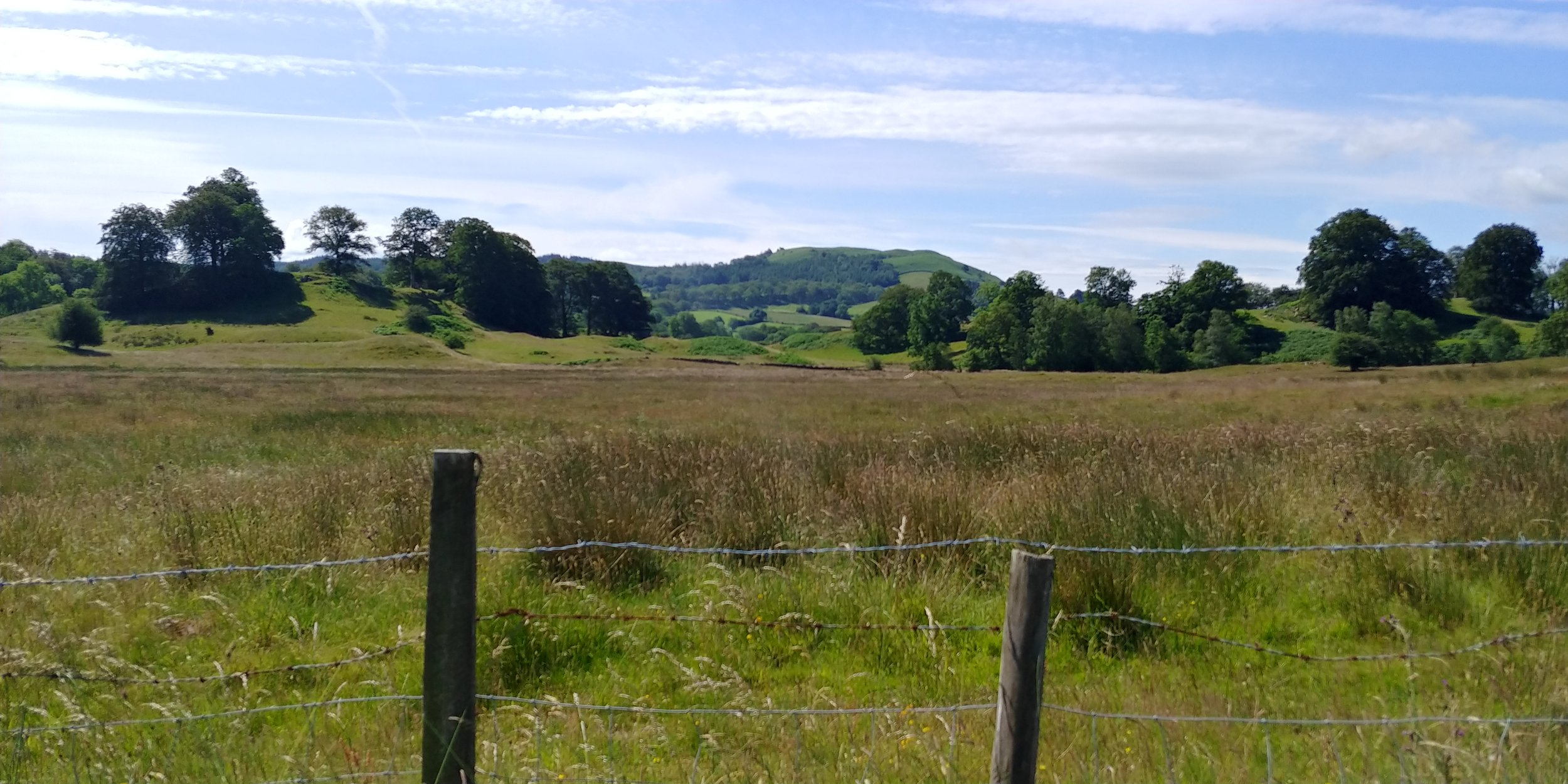 The view from the meadow pitches.