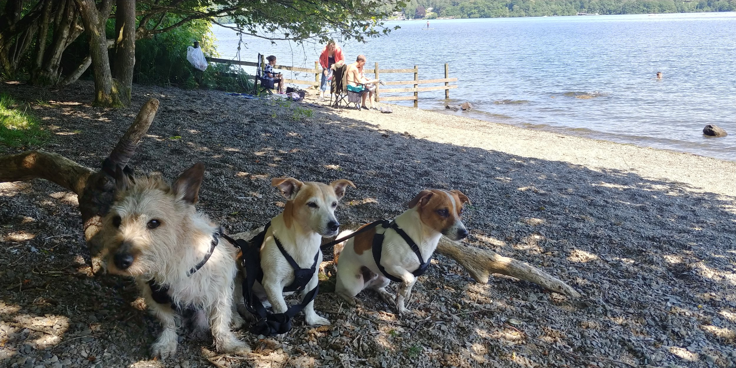 Beach boys (and girl).