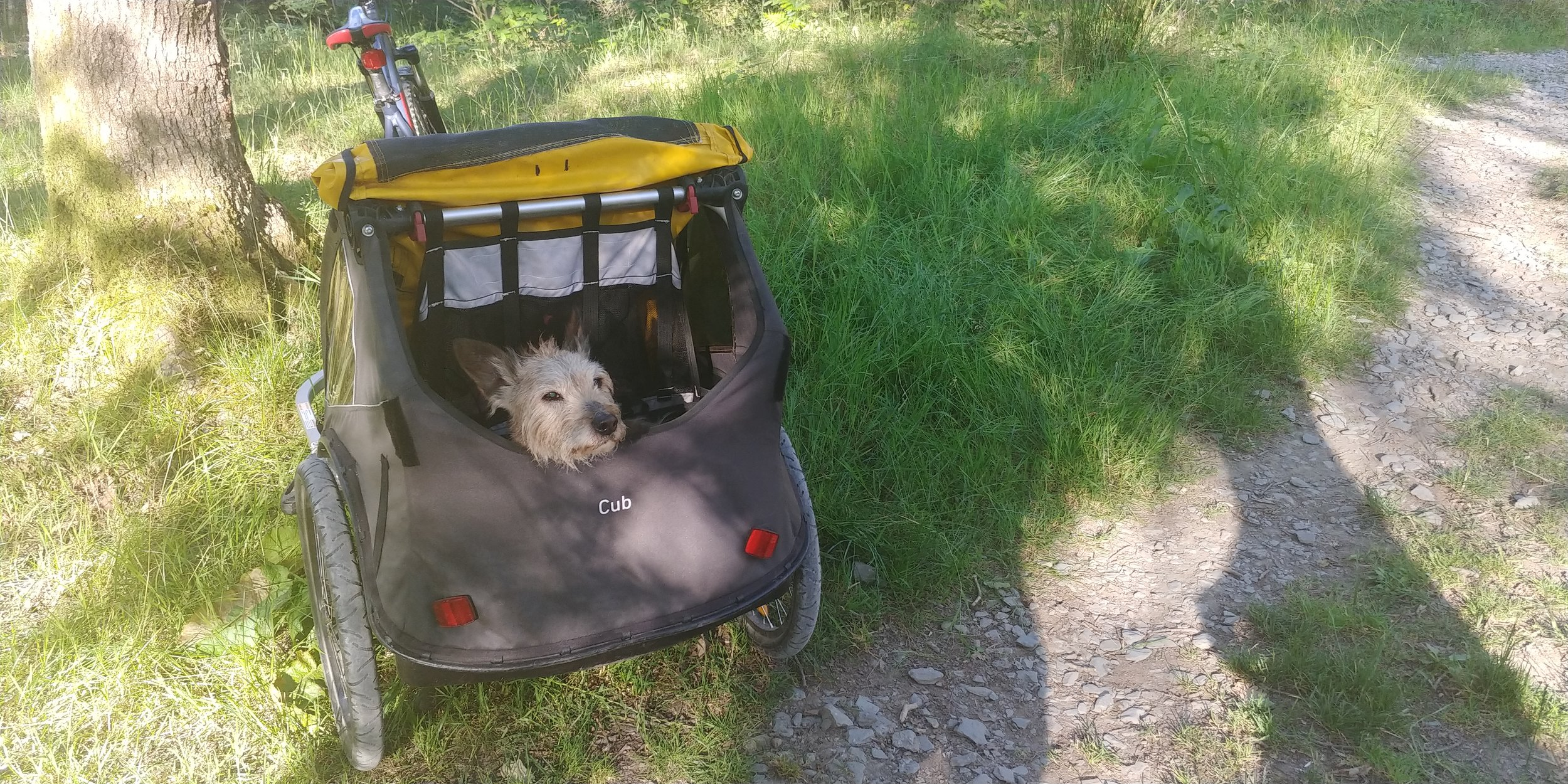 Those ears. That beard.